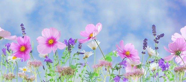 divoké květiny.jpg